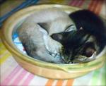 猫鍋パンナ&ココ